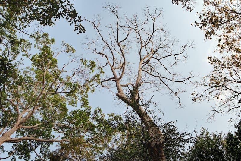 高热带树和蓝天从底视图 免版税库存照片