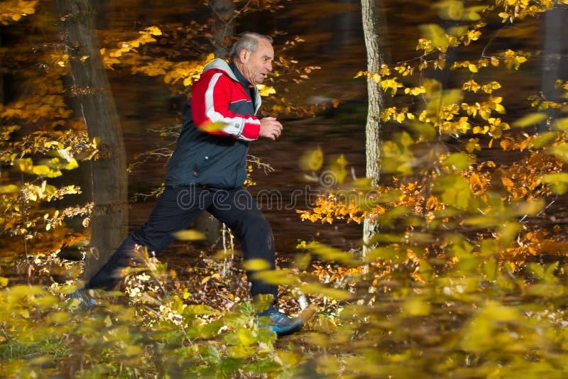 高级运行中在森林里在秋天 免版税库存图片