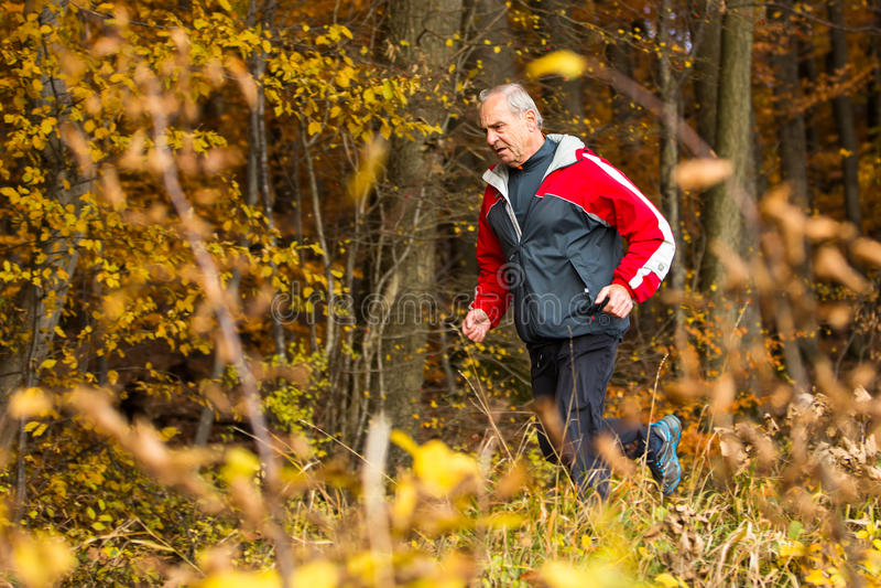 高级运行中在森林里在秋天 图库摄影