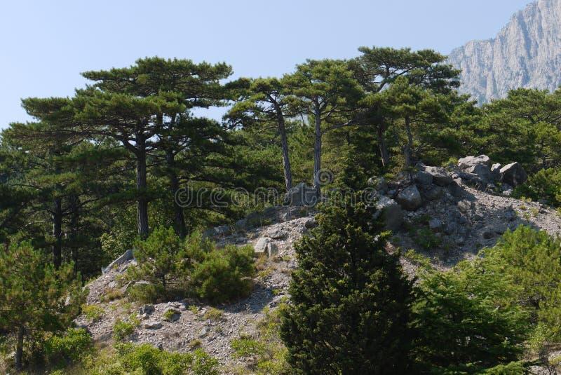 高绿色树在以高岩石为背景的蓝天下 免版税库存照片