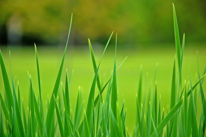 高草的草甸 免版税库存照片