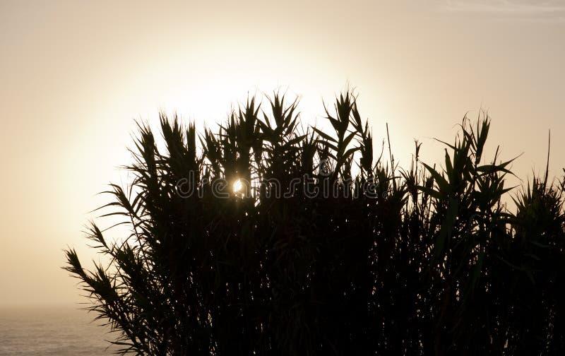 高草,大西洋日落 图库摄影