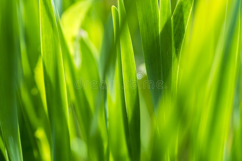 高草,正面绿色 库存照片