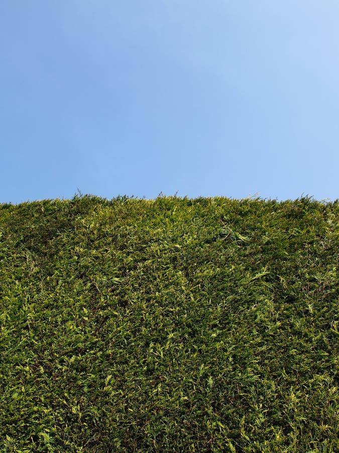 高蓝色清楚的庭院套期交易的天空 免版税库存照片