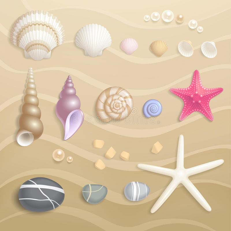 高详细的贝壳集合 免版税库存照片