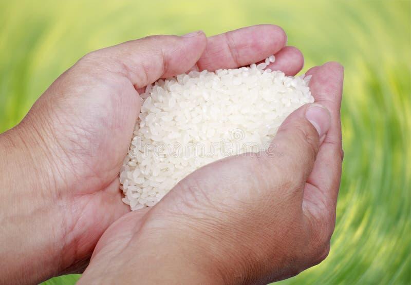 高质量米 免版税库存图片