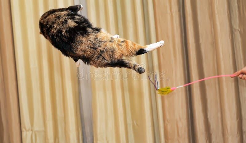 高跳跃的猫 免版税库存图片