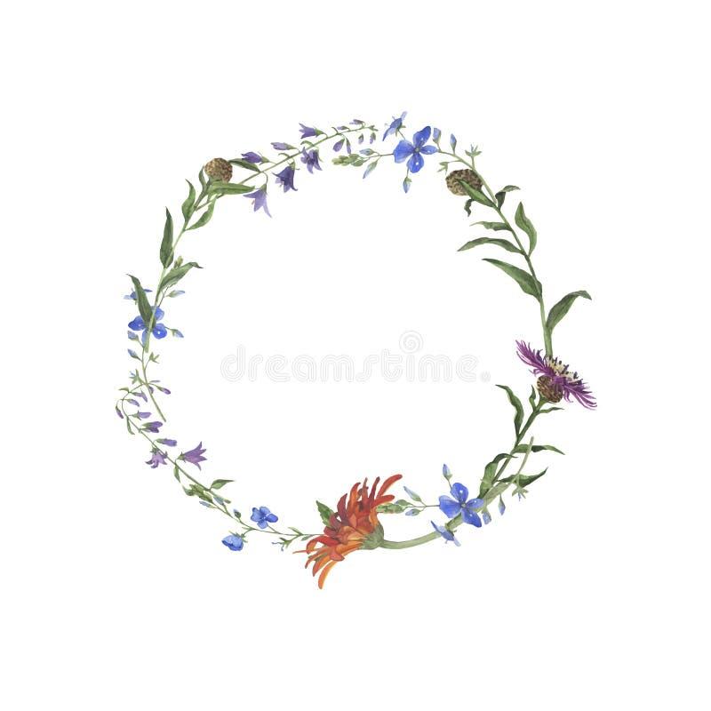 高雅与在白色背景隔绝的夏天野花的花框架 手拉的水彩传染媒介例证 向量例证