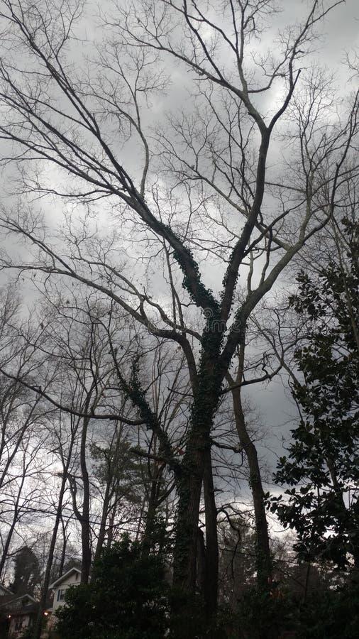 高黑暗的树 免版税库存照片