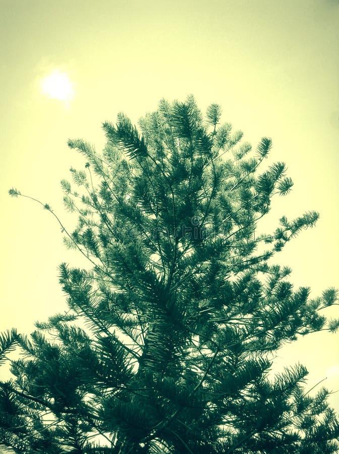 高绿色树 免版税库存照片