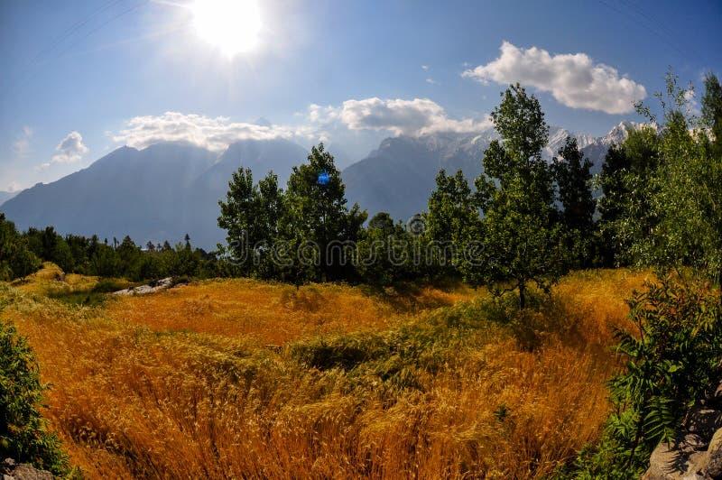 高黄色草吹在风的,喜马拉雅山,印度 免版税图库摄影