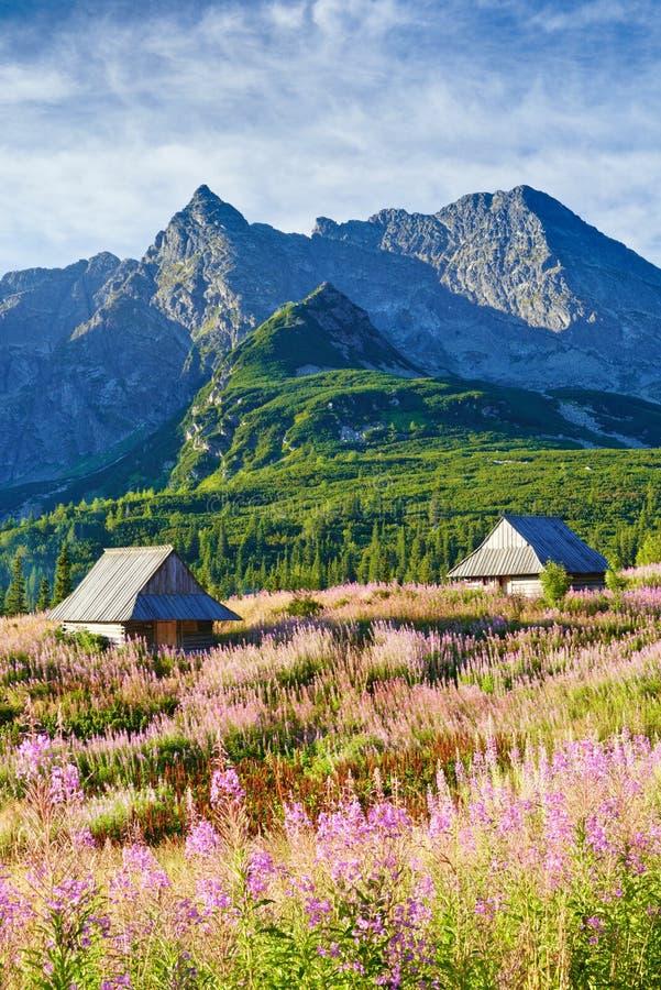 高Tatra山冠上风景自然喀尔巴汗波兰 免版税图库摄影