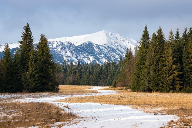 高Tatras的积雪覆盖的峰顶 波普拉德谷,斯洛伐克 斯洛伐克的冬天山风景 在草中的积雪的路 免版税库存图片