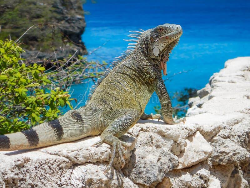 鬣鳞蜥和海 免版税库存照片