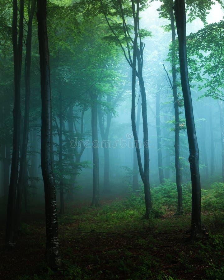 鬼的光在有绿色植被的蓝色有雾的森林里 秋天 库存照片