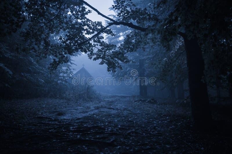鬼的有薄雾的多雨森林 免版税库存照片