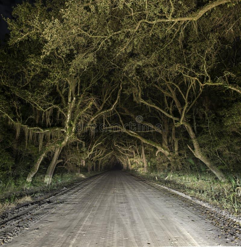 鬼的被困扰的令人毛骨悚然的国家土路 免版税库存图片