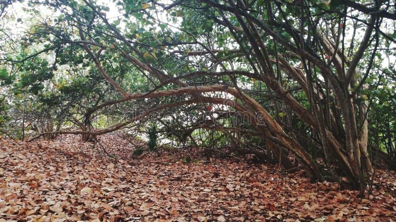 鬼的结构树 免版税库存照片