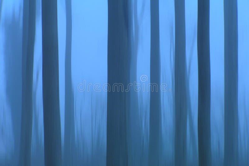 鬼魂结构树 库存图片