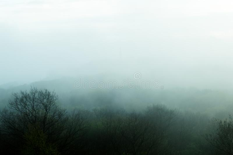 鬼,令人毛骨悚然在距离雾在冬天,当树被弄脏现出轮廓的编辑一个森林 免版税库存照片