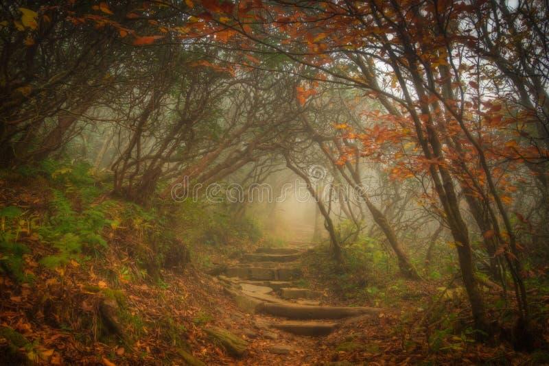 魔术森林 免版税库存照片