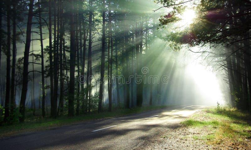 魔术的森林 免版税库存照片