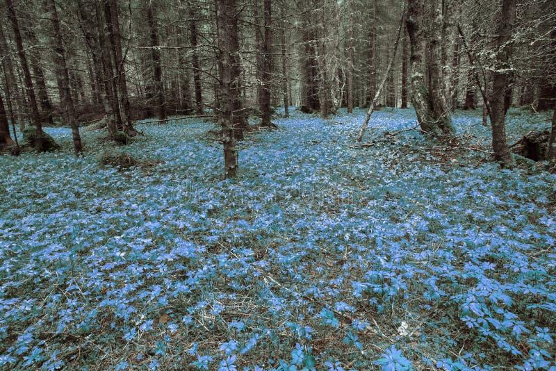 魔术的森林 免版税图库摄影