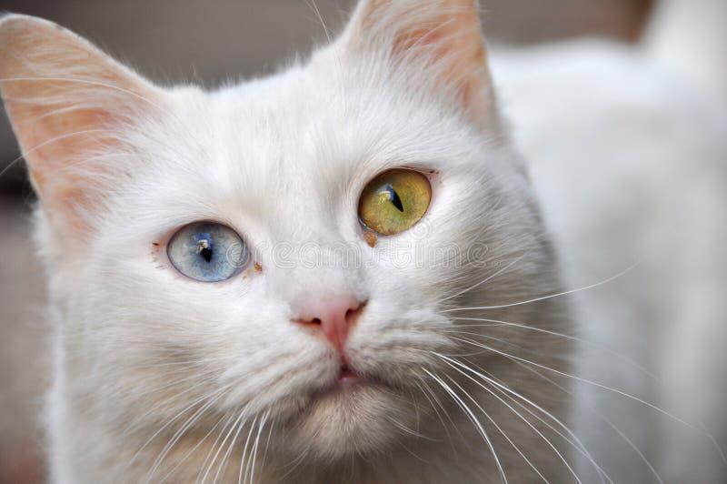 魔术的猫 免版税库存照片