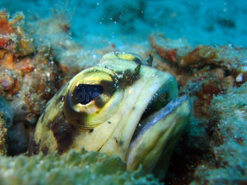 鱼下颌 库存图片