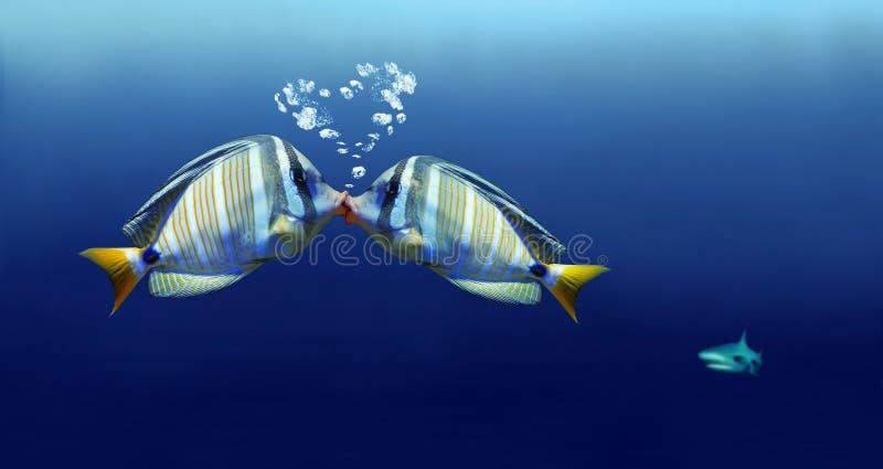 鱼亲吻 免版税库存图片