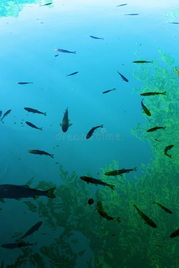 鱼和海草在绿松石水的背景中 免版税库存图片