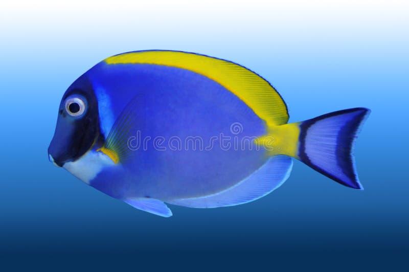 鱼回归线 库存照片