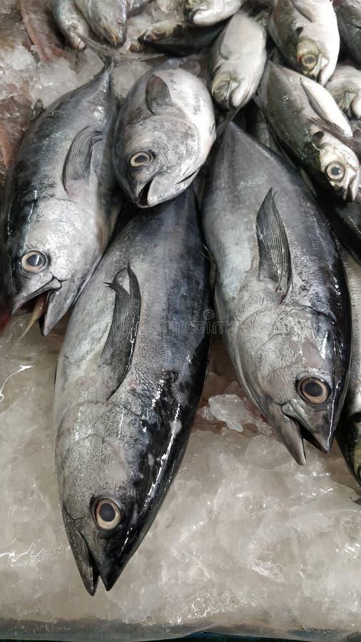 鱼在市场上 免版税库存照片