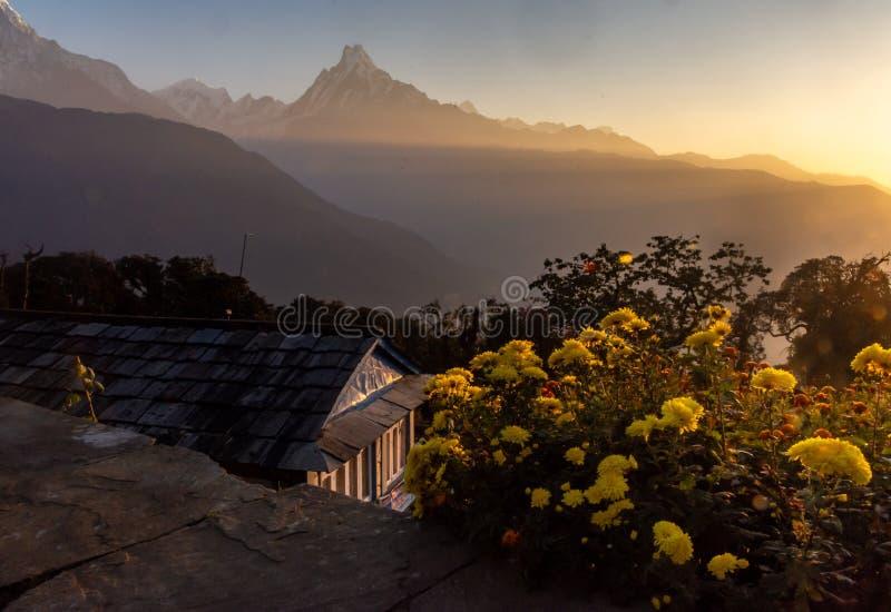 鱼在日出期间的尾巴峰顶鱼尾峰水平的照片与作为前景的黄色花,喜马拉雅山 免版税图库摄影