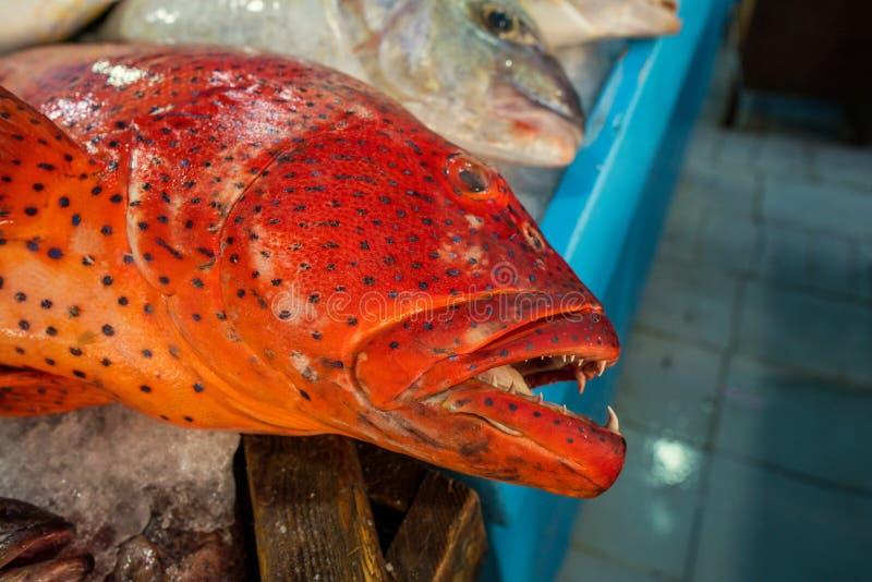 鱼在鱼市上 免版税库存照片