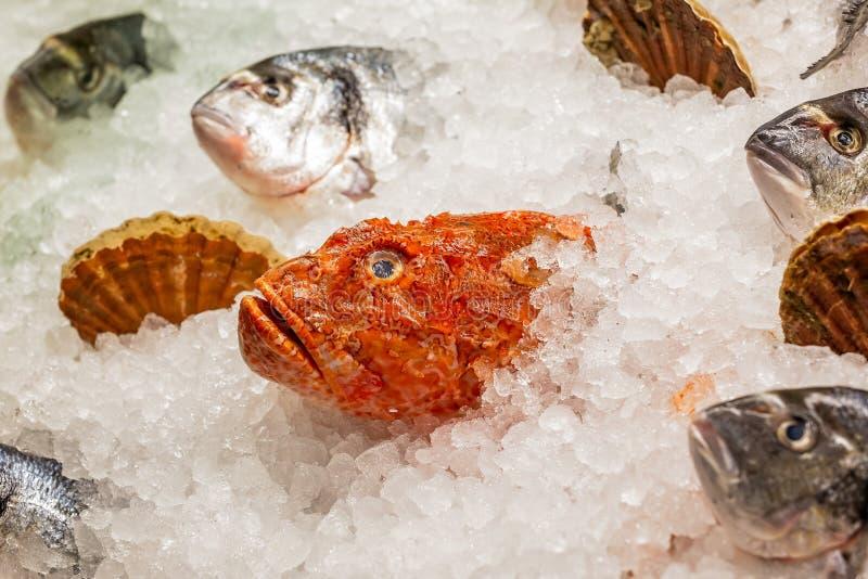 鱼头和壳在显示在冰床上  库存照片