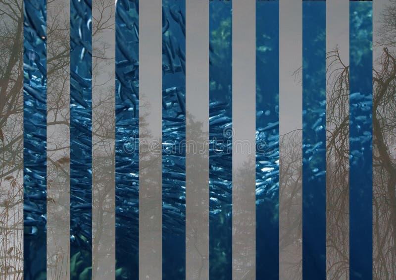 鱼学校 皇族释放例证