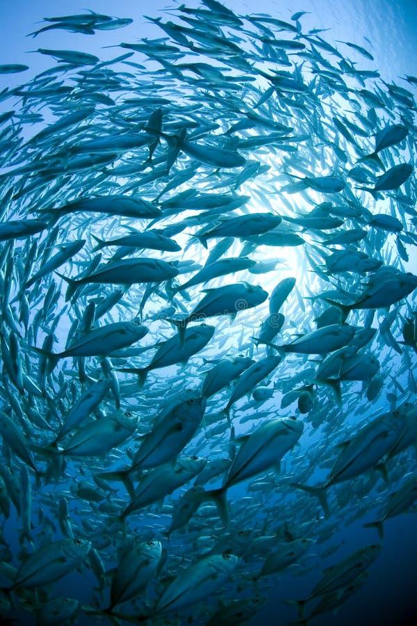 鱼学校 免版税库存照片