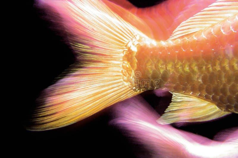 鱼尾标 免版税图库摄影
