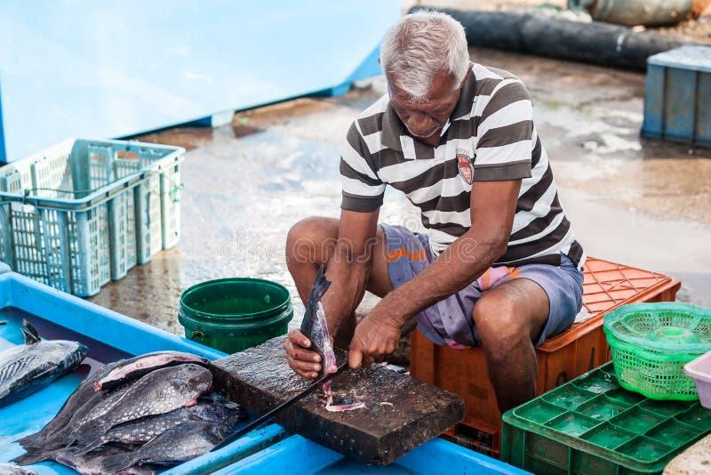 鱼市在斯里兰卡 库存照片