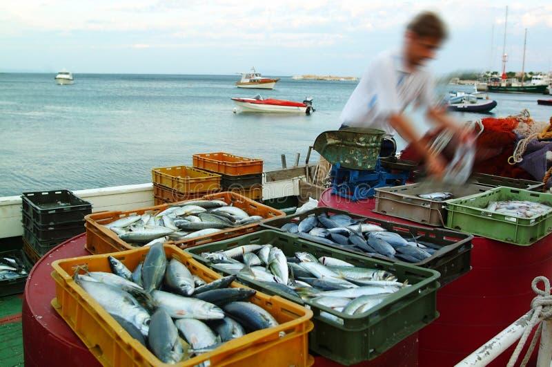 鱼市 图库摄影