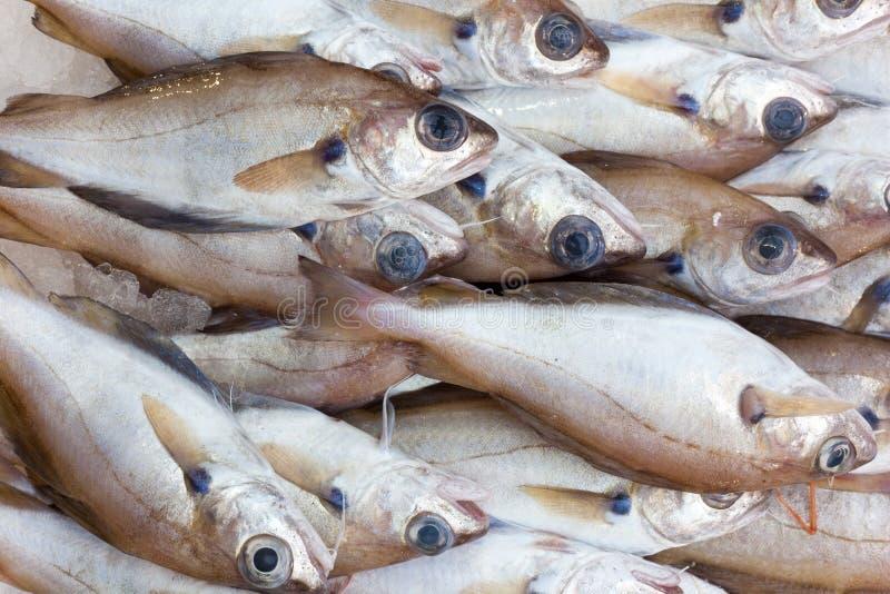鱼待售 免版税库存照片