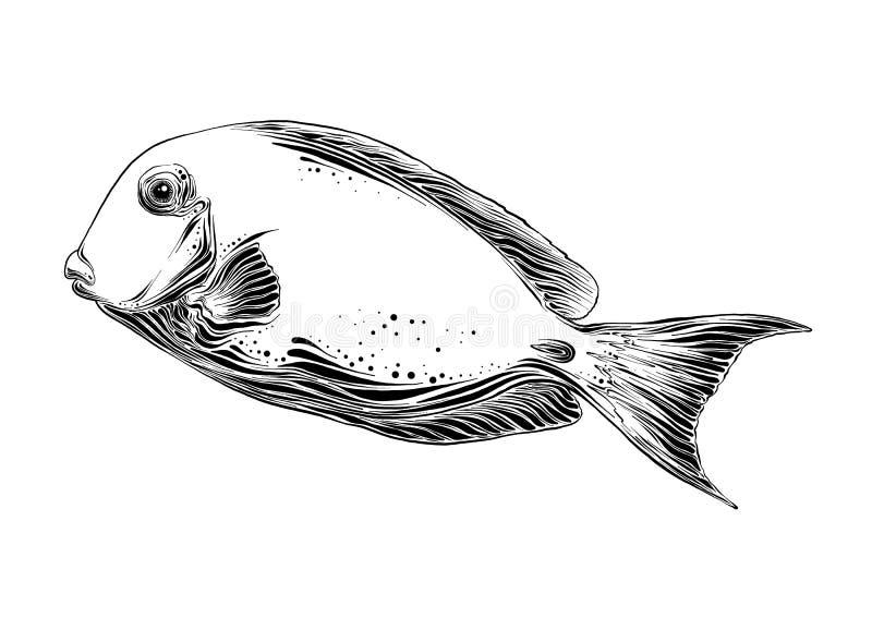 鱼手拉的剪影在黑色的 背景查出的白色 画为海报、装饰和印刷品 库存例证