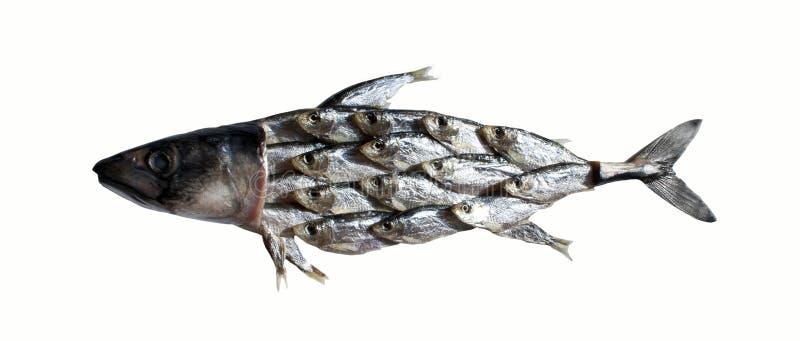鱼拼贴画 库存图片