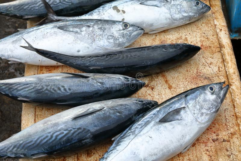 鱼新销售额 免版税库存图片