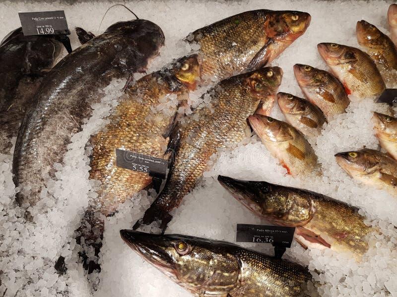鱼新鲜的冰 库存图片