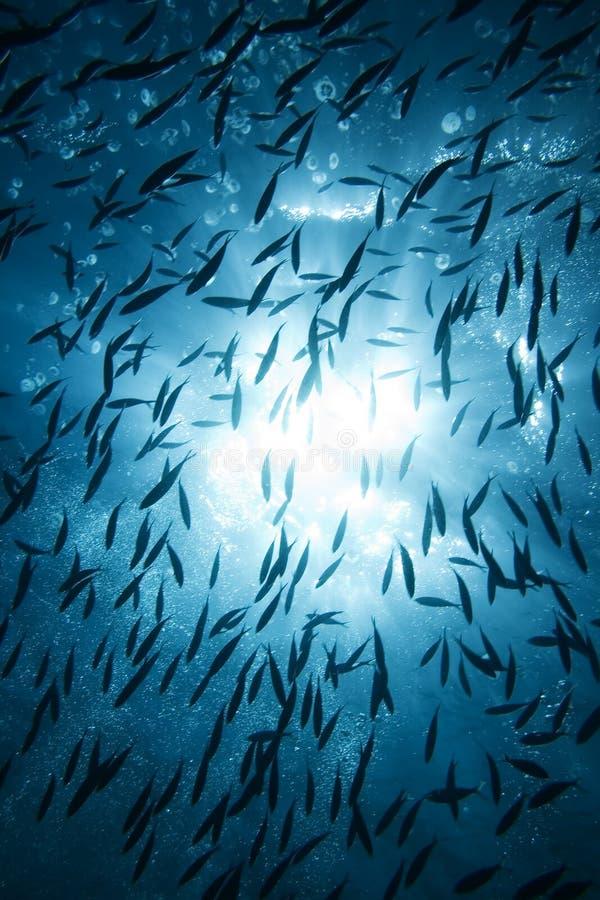 鱼星期日 库存图片