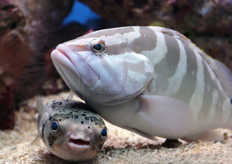 鱼朝向我 库存图片