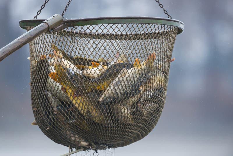 鱼池 免版税图库摄影