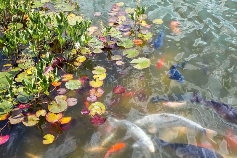 鱼游泳在水面下 免版税图库摄影